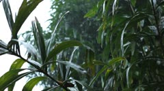 Mansoon Jungle Forest, Heavy Rain, Raining, Tropical Storm, Rainy Season, Cloudy Stock Footage