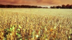 Field at Sunset - stock footage