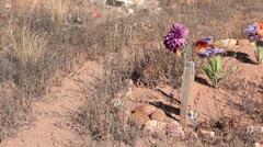 Cemetery grave flower weeds pan P HD 0238 Stock Footage