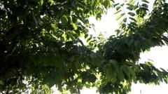 nature sun beam - stock footage