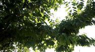 Nature sun beam Stock Footage