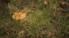 Mushrooms in wild forest Stock Footage