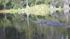 Alligator Swimming Away Stock Footage