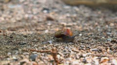 Snail and shell 02 Stock Footage