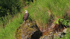 Eagle Mossy Rock Stock Footage