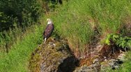 Stock Video Footage of Eagle Mossy Rock