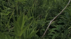 Jungle Of Plants Close-Up Stock Footage