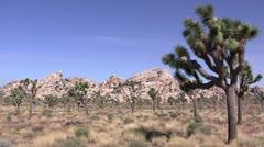 Joshua Tree National Park, California Stock Footage