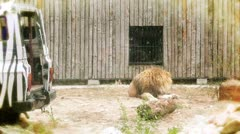Lion near a safari car Stock Footage