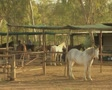 Horses standing in enclosures Footage