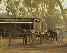 Horses standing in enclosures Stock Footage