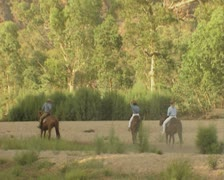 Horses cantering Stock Footage