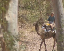 View of camel riders between two trees Stock Footage