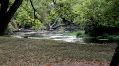 peaceful creek3.mp4 - stock footage