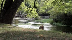 peaceful creek4.mp4 - stock footage