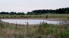 pond2.mp4 - stock footage