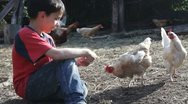 Boy and chickens Stock Footage