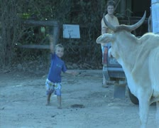 Boy throwing apple to cow Stock Footage