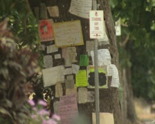 Tree with notices pinned to it Stock Footage