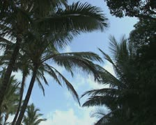 Shot of palm trees and beach Stock Footage
