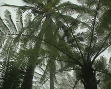 View of palm leaves against sky Stock Footage