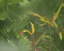 Close up of leaves and foliage Stock Footage