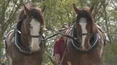 Clydesdales plowing a field. Stock Footage