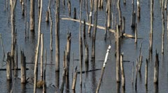 Dead forest Stock Footage