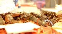 Live Lobsters Stock Footage
