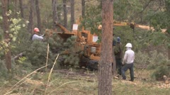 P01654 Forest Thinning Using Chipper Stock Footage