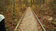 LP-GreatSwamp-A03 Stock Footage