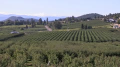 Canada: Orchards in Lake Country, Okanogan Valley Stock Footage