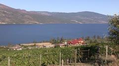 Canada: Vineyard in Beautiful Okanogan Valley Stock Footage
