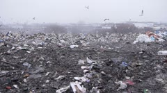 stock video footage gulls and poor rummage in garbage - stock footage