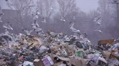 stock footage gulls at the landfill garbage dump - stock footage