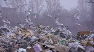 Stock footage gulls at the landfill garbage dump Stock Footage