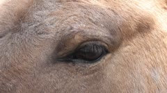 Stock Video Footage of eye horse