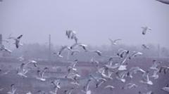 stock video footage huge garbage dump ecological disaster - stock footage