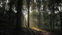 Bali Sunlight trees Stock Footage