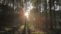 Bali Sunlight trees 4 Stock Footage