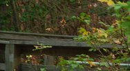 LP-GreatSwamp-A56 Stock Footage