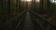 LP-GreatSwamp-A62 Stock Footage