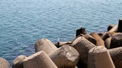 Breakwater and seagulls - stock footage