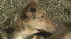dog close-up - stock footage