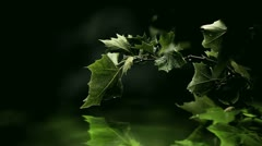 Green leaves over glowing water with some raindrops Stock Footage