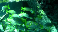 Numerous tropical silver fish swim around a coral reef. Stock Footage