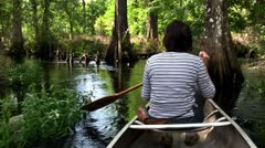 POPV from a boat traveling through a mangrove swamp. Stock Footage