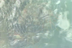 Top down view through water of lobster trap Stock Footage
