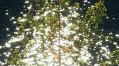 Autumn Poplars with Sun on Lake Stock Footage