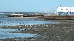 Hill Head Harbour Stock Footage